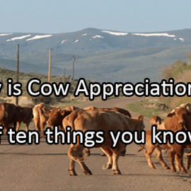 Writing Prompt for July 15: Cows