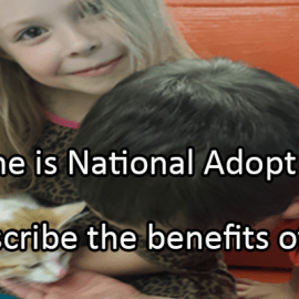 Writing Prompt for June 27: Adopt a Cat