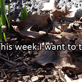 Writing Prompt for March 30: Try This Week