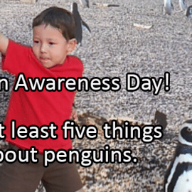 Writing Prompt for January 20: Penguins