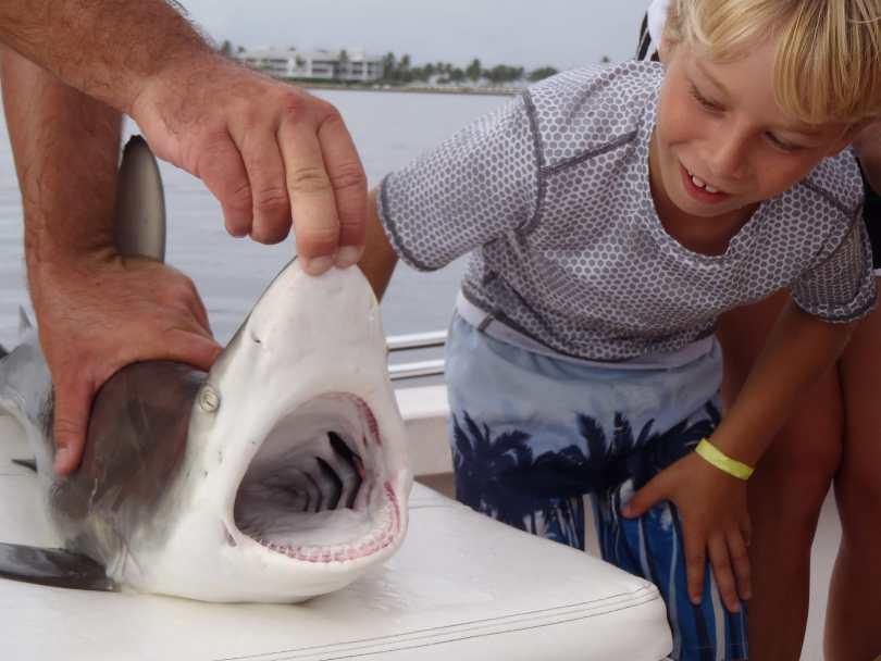 Black tip Shark, 11-21-13, Captain Josh Schardin, Redfish Pass, North Captiva, Fort Myers, Sanibel & Captiva Charters & Fishing Guide Service.