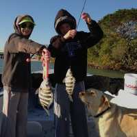 Fort Myers: 3/28/13 Fort Myers, Sanibel & Captiva Fishing Report ~ sheepshead & snook, Blind Pass