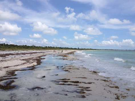 Sand Dollars, Shelling, Cayo Costa, June 14, Fort Myers Fishing Charters & Fort Myers Fishing Report.