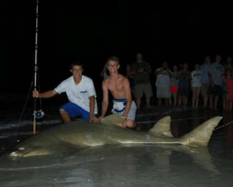 Huge Sawfish, July 27, Fort Myers Fishing Report & Fort Myers Fishing Charters.