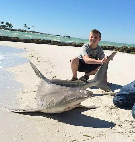 Large Sandbar Shark, Redfish Pass, North Captiva, 2-19-14, Fort Myers Fishing Report & Charters ~ #FortMyersFishing.