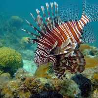 Fort Myers Fishing Report, 8/31/14: Lionfish ~ #FortMyers
