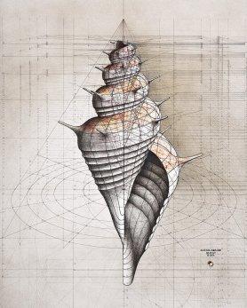 shell-1_1024x1024