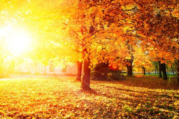 Где посмотреть лучшие осенние пейзажи в Америке: 19 ...
