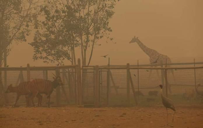 В Калифорнии владелец заповедника спас животных от огня, а свой дом не смог