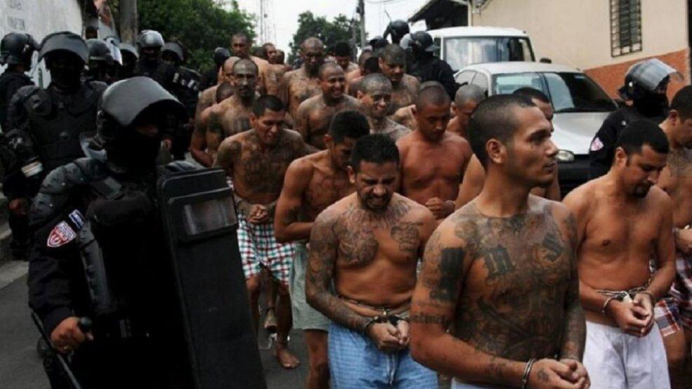 убийства и запугивания как банда Ms 13 терроризирует квинс Forumdaily