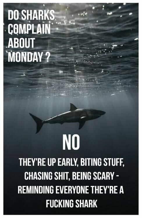 هفته آینده این اتفاق می افتد بنابراین از دست ندهید! Tal Levy Shark Real Estate با مسافت پیموده شده زیادی در آب ، میزبان ...