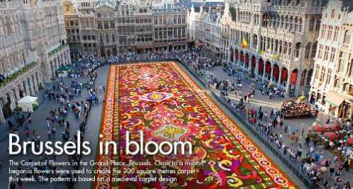 Flower Carpet Brussels Belgium 1