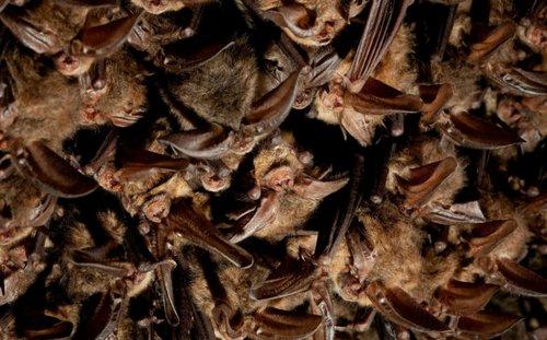 bats 6