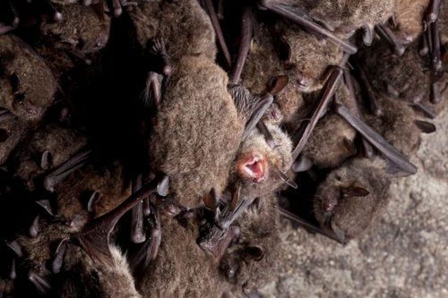 bats 7
