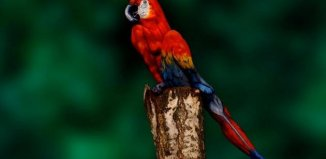 parrot-or-lady.jpg