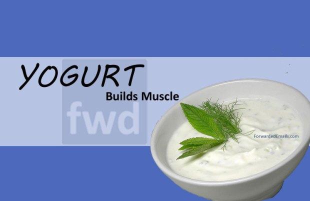 yogurt-builds-muscle