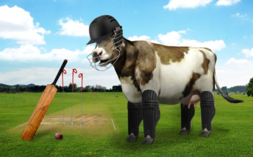 Cow and cricket_Forward Press