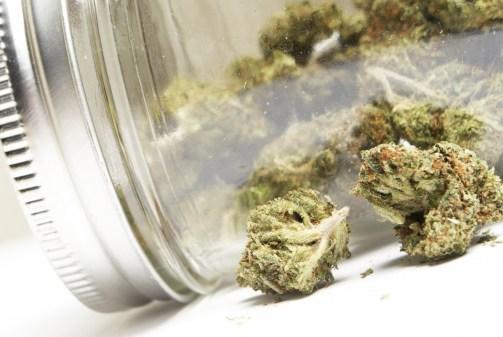 Het middel van de toekomst: cannabis