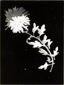 Foto: László Moholy-Nagy