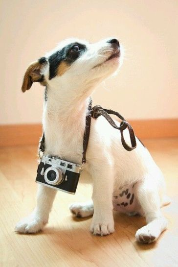 Podemos sair, passear e fotografar hoje?
