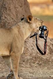 animais-gostam-de-fotografia-28