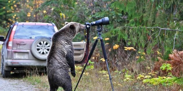 animais-gostam-de-fotografia-31