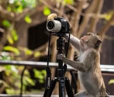 animais-gostam-de-fotografia-41