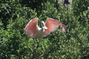 Tropical birds abound on Spoil Islands