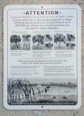 Mangrove-Sign-749x1024