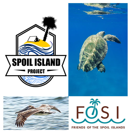 Spoil Island Project Header (Female Turtle)