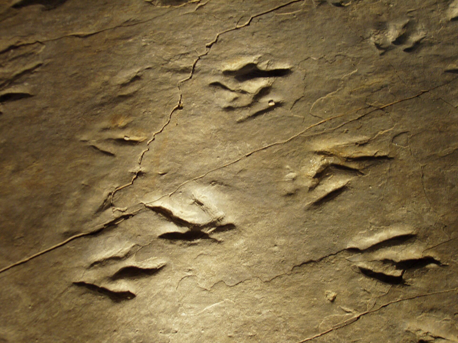 List Of State Fossils