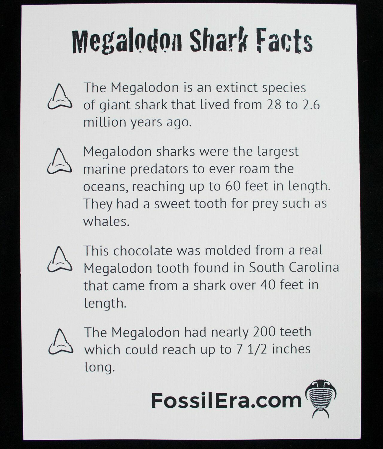 White Chocolate Megalodon Shark Tooth For Sale