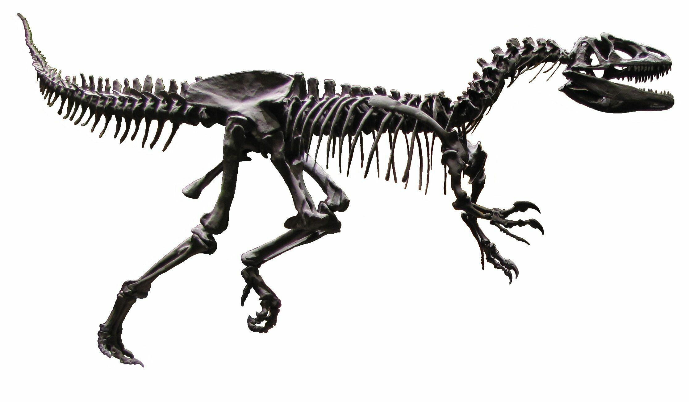 Allosaurus Leg On Custom Mount