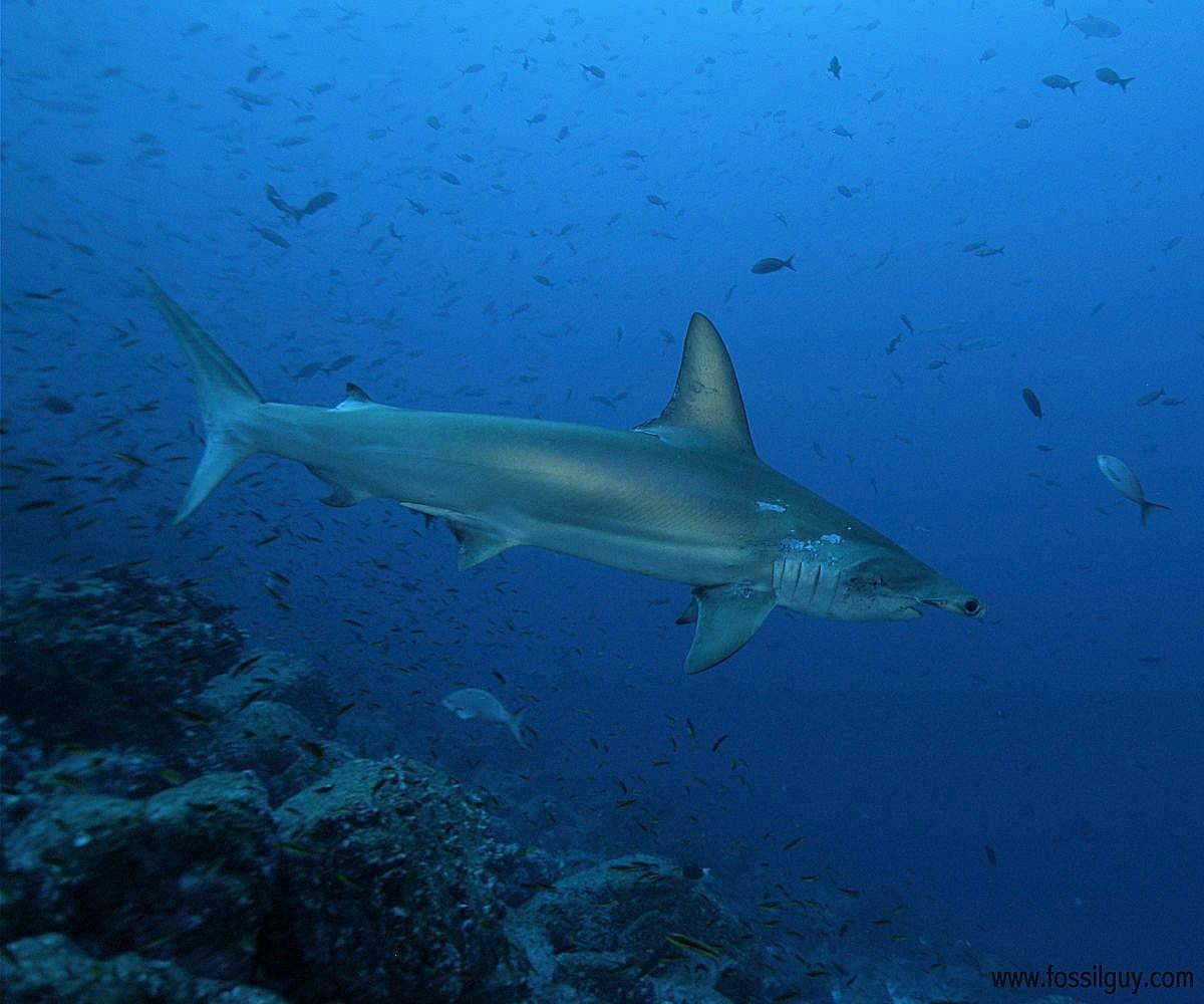 The Shark Gallery