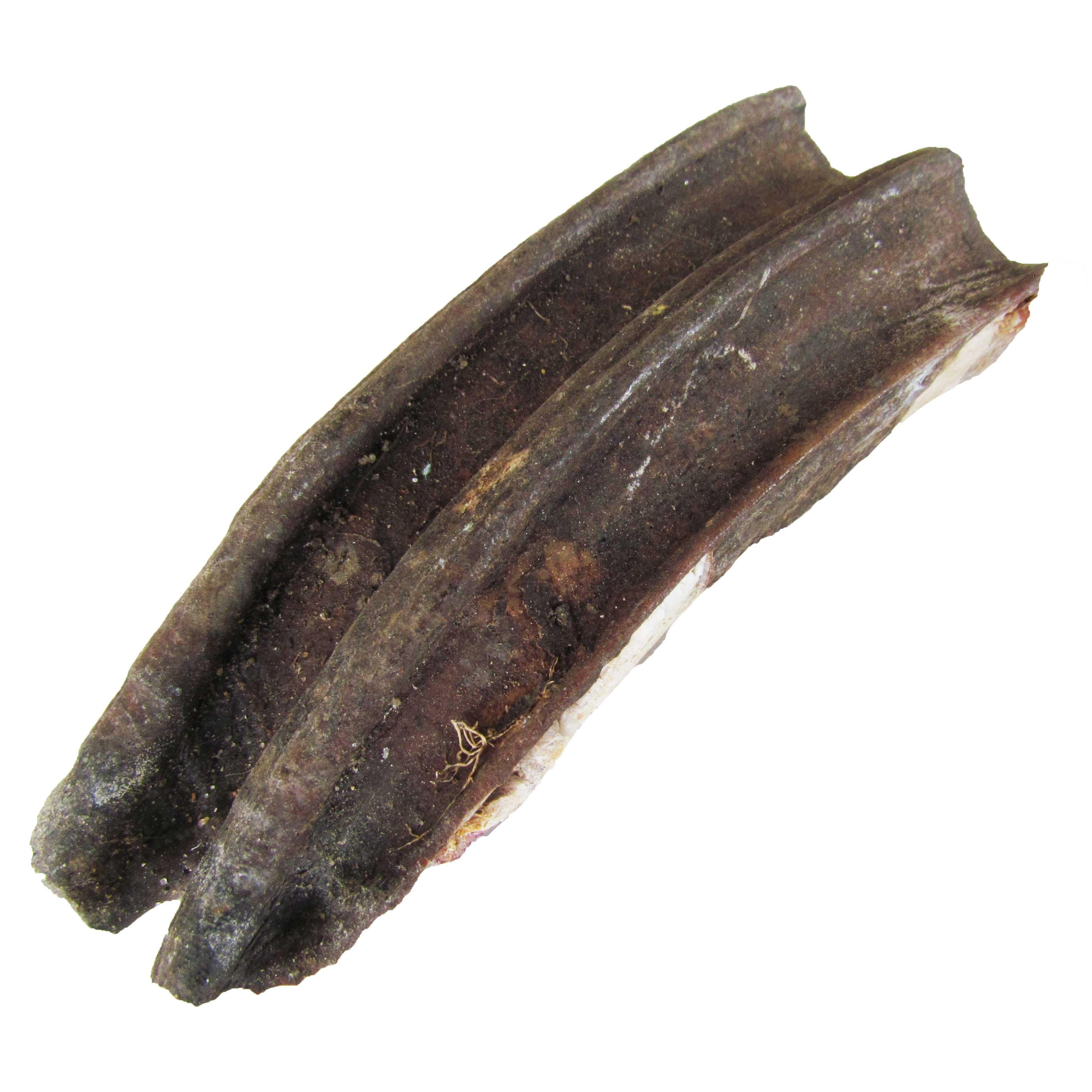 Fossil Horse Teeth
