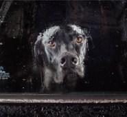 dogsincars_280