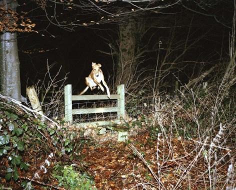 Of the Night - Lorna Evans