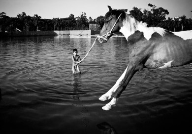 Horse bathing in Suhrawardi Uddyan park's lake. This boy performs in a circus team with horses.