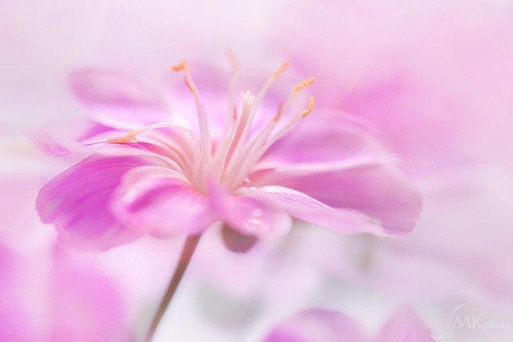Photo by {link:https://500px.com/photo/102317035/spring-by-silke-kemmer}Silke Kemmer{/link}