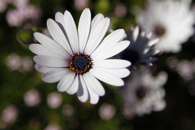 小心白花會令相機誤判,導至曝光不足,這時要增加曝光或是+EV。 (Photo by {link:https://www.flickr.com/photos/dittmars/10324953386}Percita{/link})