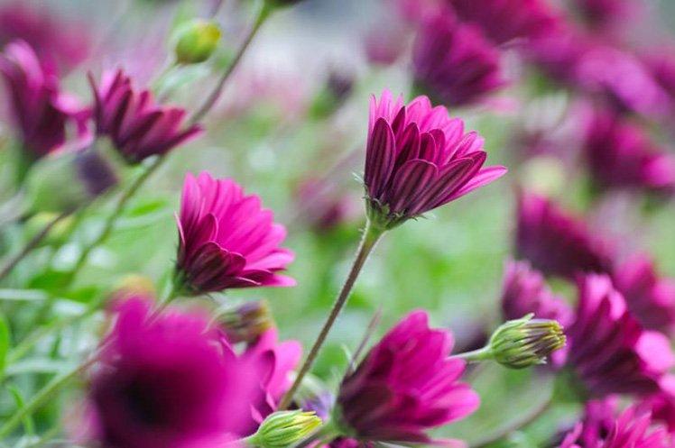 利用淺景深把其中一朵花突顯出來。 (Photo by {link:https://www.flickr.com/photos/cuellar/7236926874}Jose Maria Cuellar{/link})