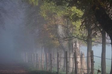 Herbst - Allee im Nebel Moni Merk