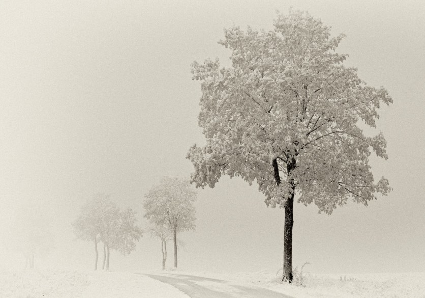 Johannes Heumann - Winterbäume