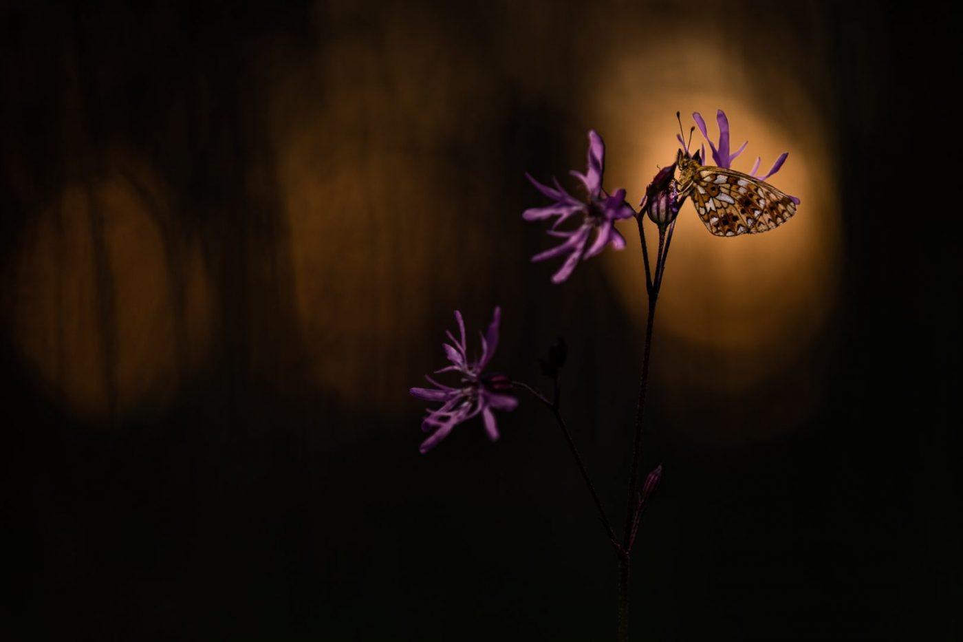Gute Nacht Falter - von Torsten Christ