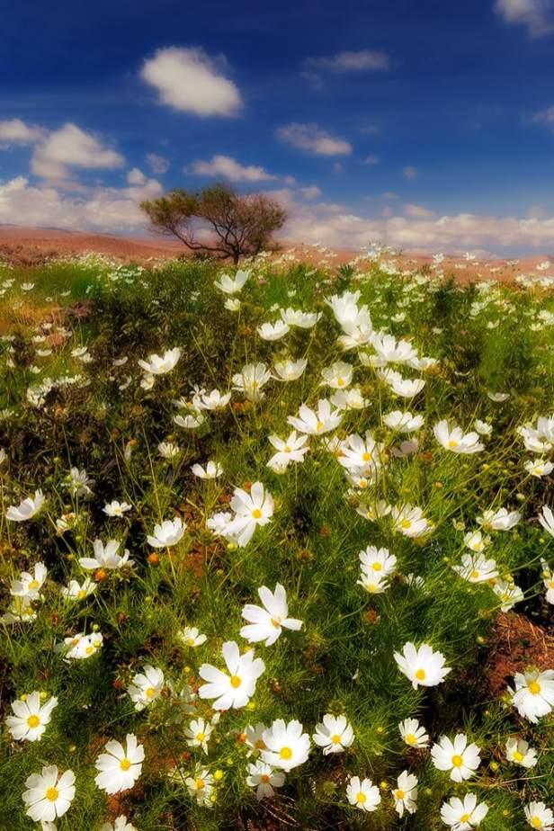 Fotoexplorer-Marcio-Cabral-CHI-Deserto-do-Atacama-028