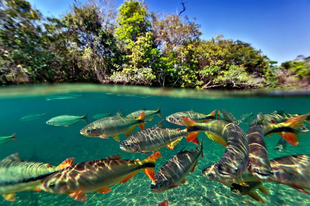 Fotoexplorer-Marcio-Cabral-Workshop-Bonito-Pantanal-008