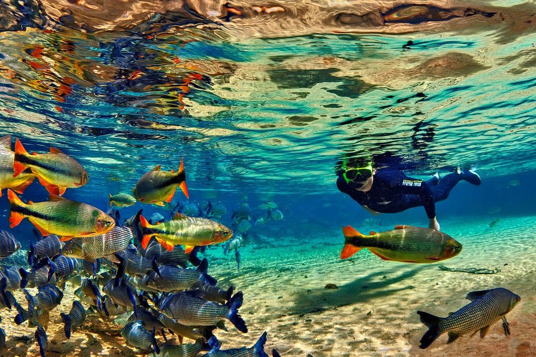 Fotoexplorer-Marcio-Cabral-Workshop-Bonito-Pantanal-012