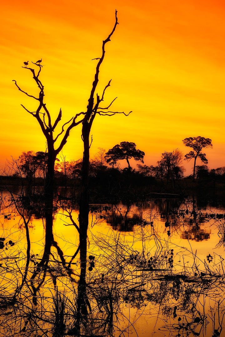 Fotoexplorer-Marcio-Cabral-Workshop-Bonito-Pantanal-018