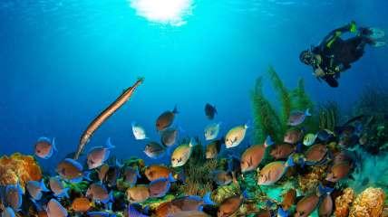 Fotoexplorer-Marcio-Cabral-HOL-Bonaire-001