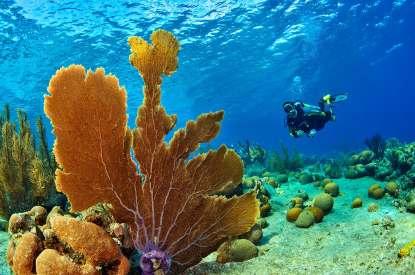 Fotoexplorer-Marcio-Cabral-HOL-Bonaire-005